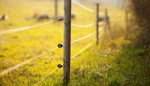 electric-fence-installation